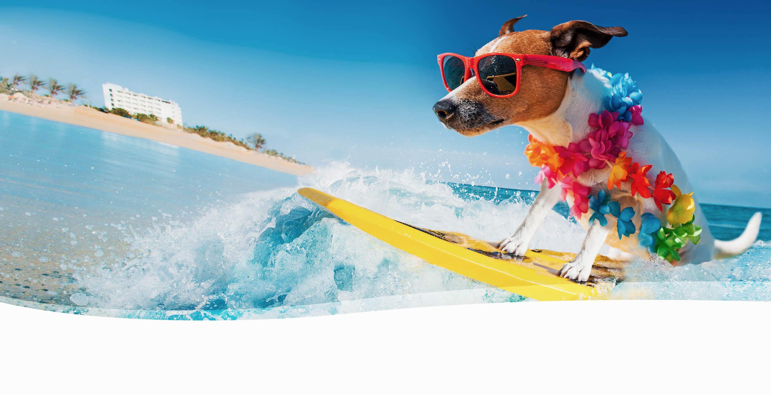 City Subaru - Summer Dog