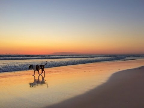 Beautiful Sunset On The Beach In Western Australia Near City - Best Dog Beaches in Perth