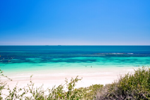 Best Dog Beach Perth, Looking for the best dog beaches in Perth? We've got you